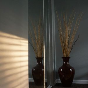 Plant reflected in mirror