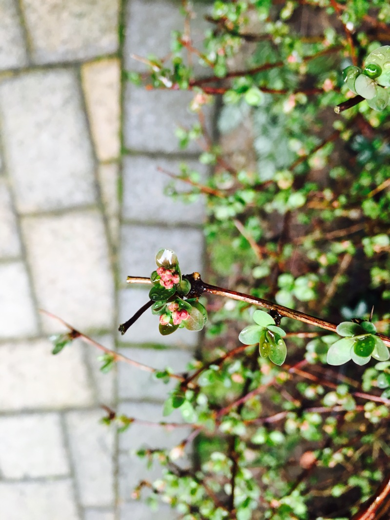 Interstitial 108: Blooming Barberry